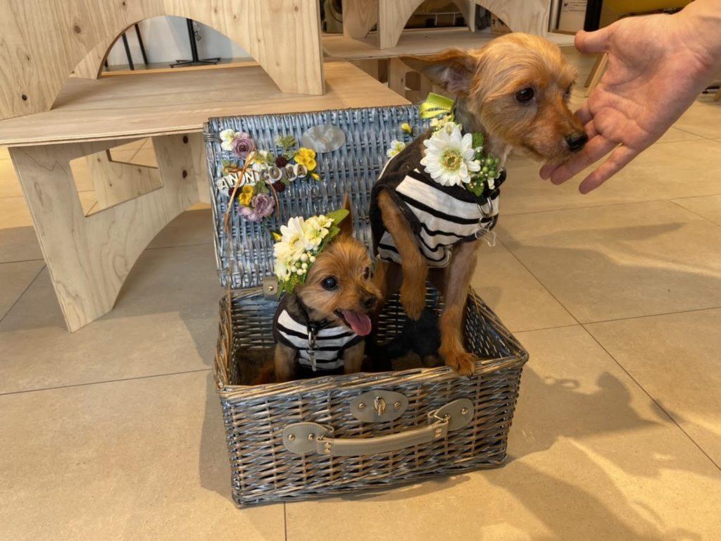 犬連れ、ワークショップ、花冠